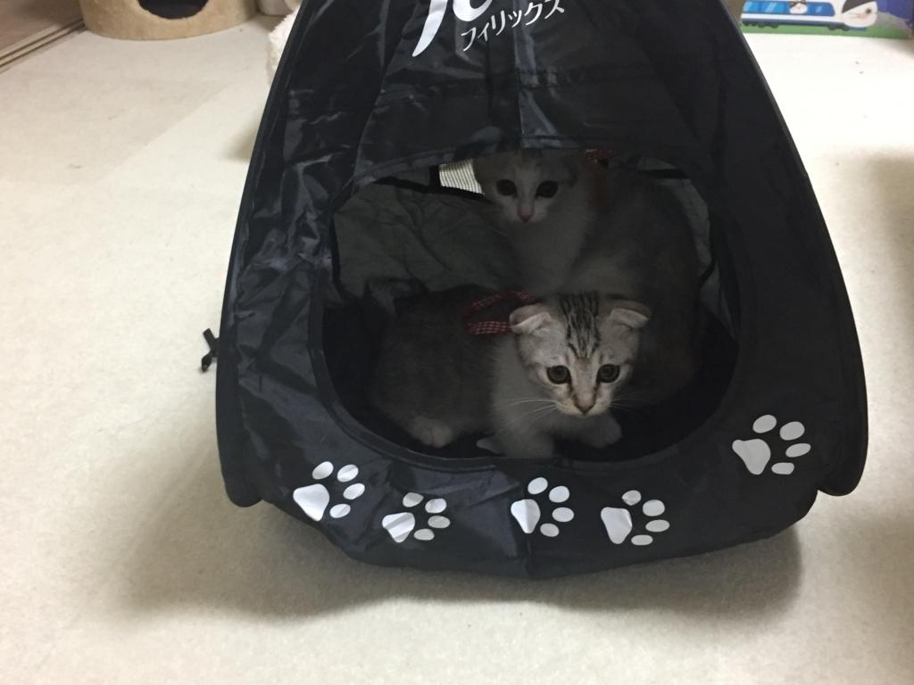 f:id:Gomez-cat:20170610230200j:plain