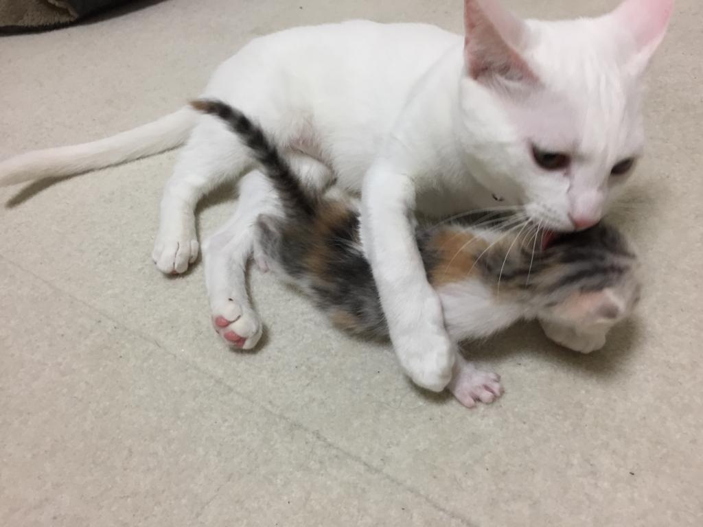 f:id:Gomez-cat:20170715150831j:plain