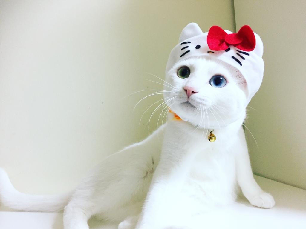 f:id:Gomez-cat:20180121002409j:plain