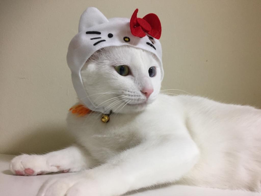 f:id:Gomez-cat:20180121002753j:plain
