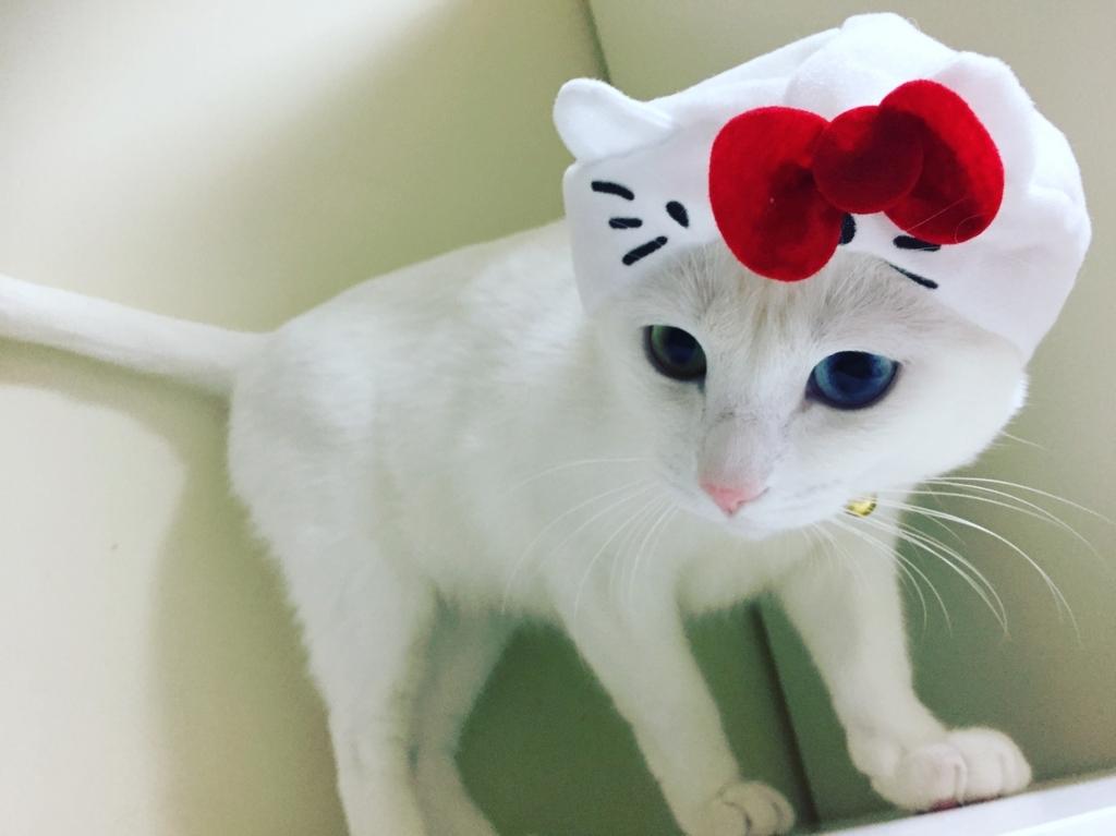 f:id:Gomez-cat:20180121002905j:plain