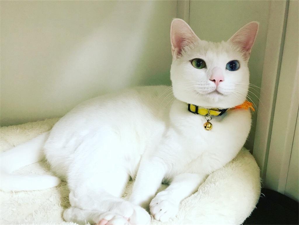 f:id:Gomez-cat:20180122090813j:image