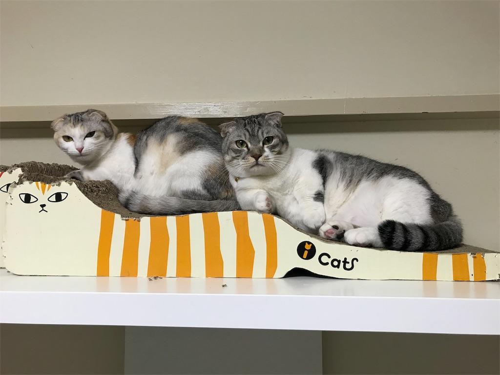 f:id:Gomez-cat:20180214000645j:image