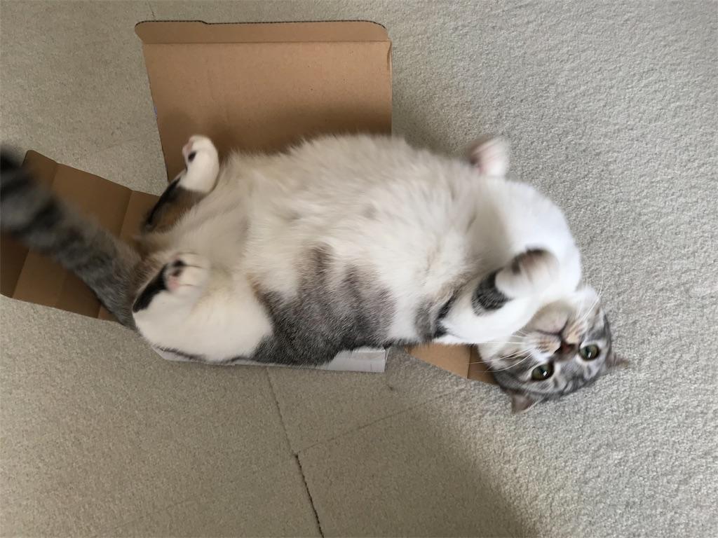 f:id:Gomez-cat:20180214151948j:image