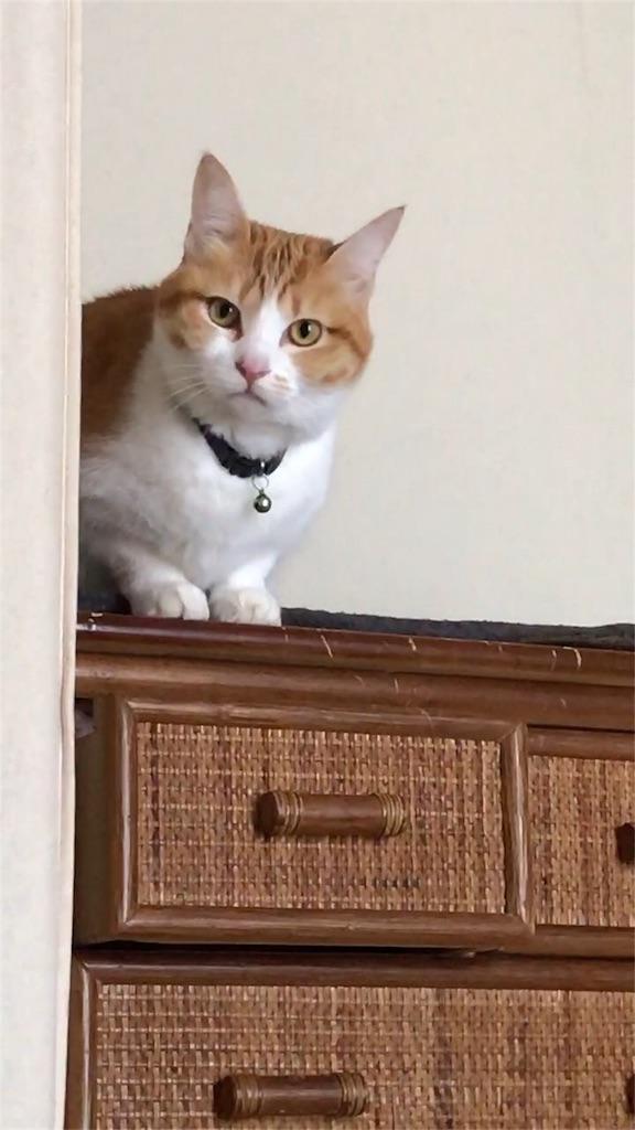 f:id:Gomez-cat:20180215104446j:image