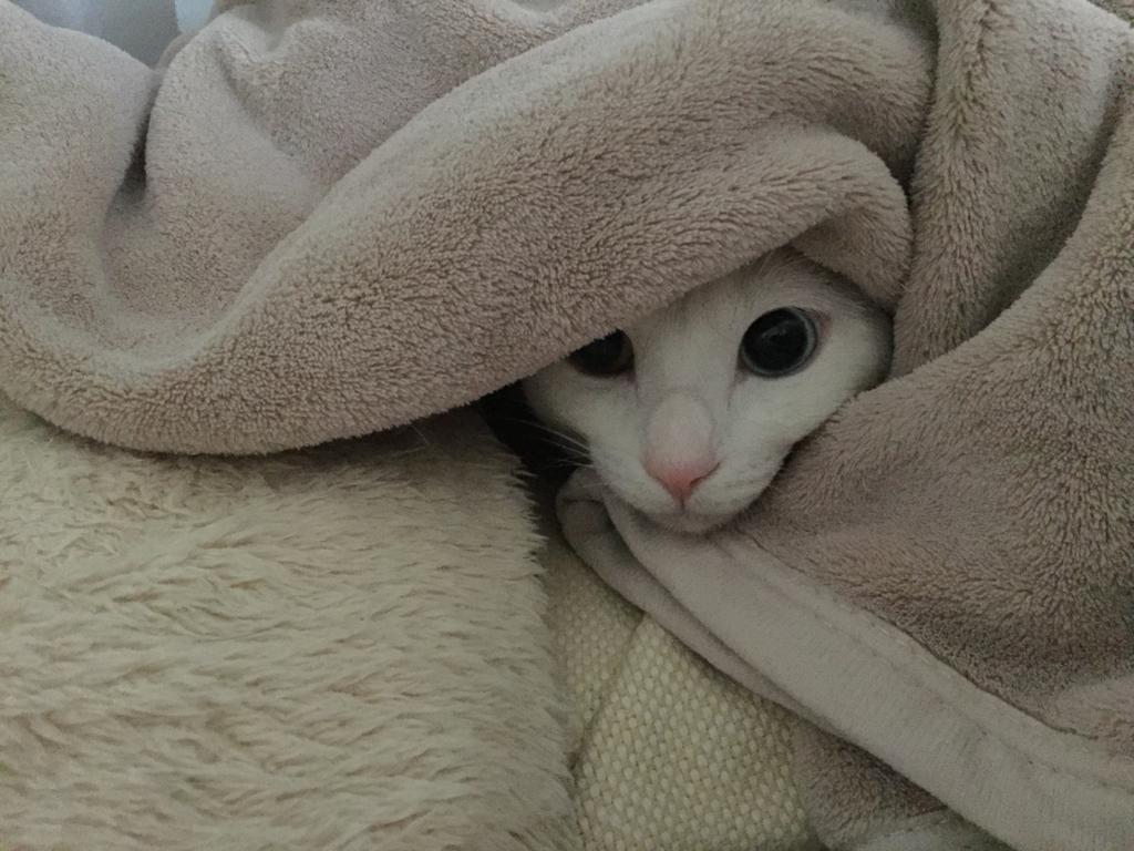 f:id:Gomez-cat:20180215134736j:plain