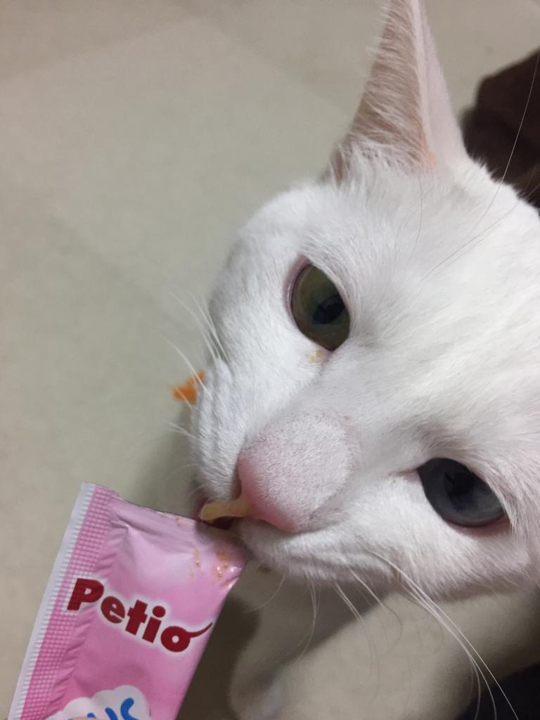 f:id:Gomez-cat:20180215173116j:plain