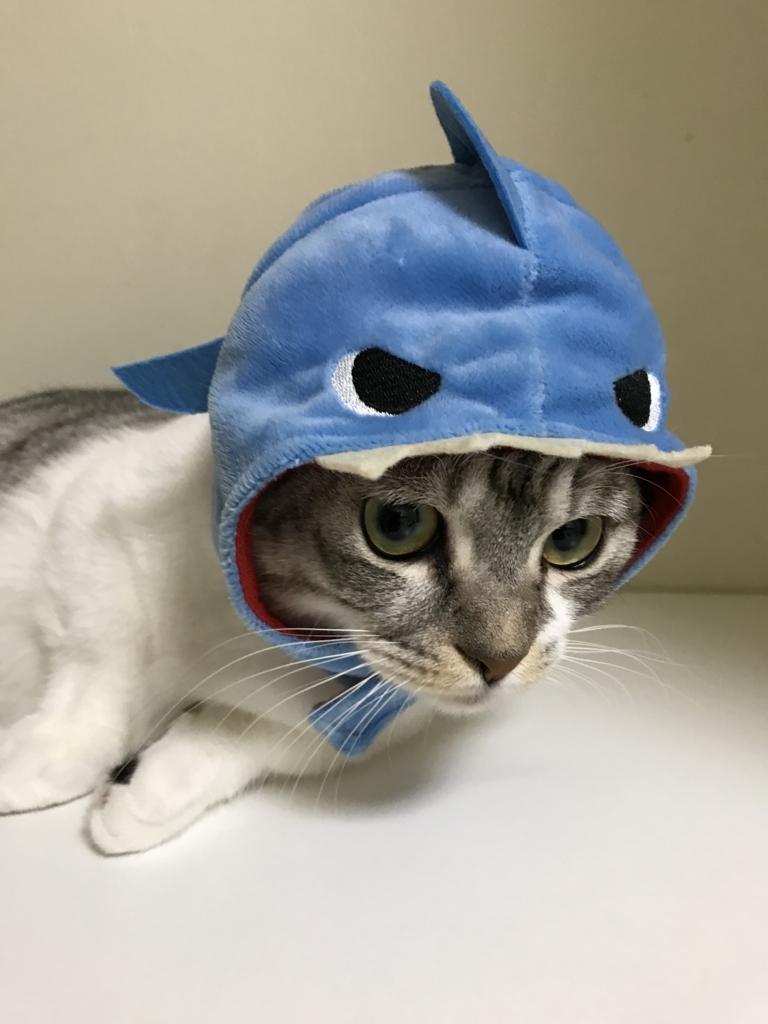 f:id:Gomez-cat:20180215192155j:plain