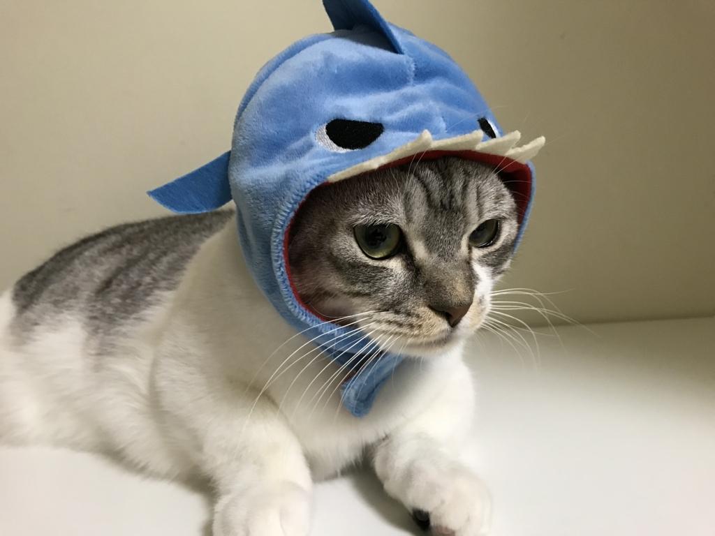 f:id:Gomez-cat:20180215192220j:plain