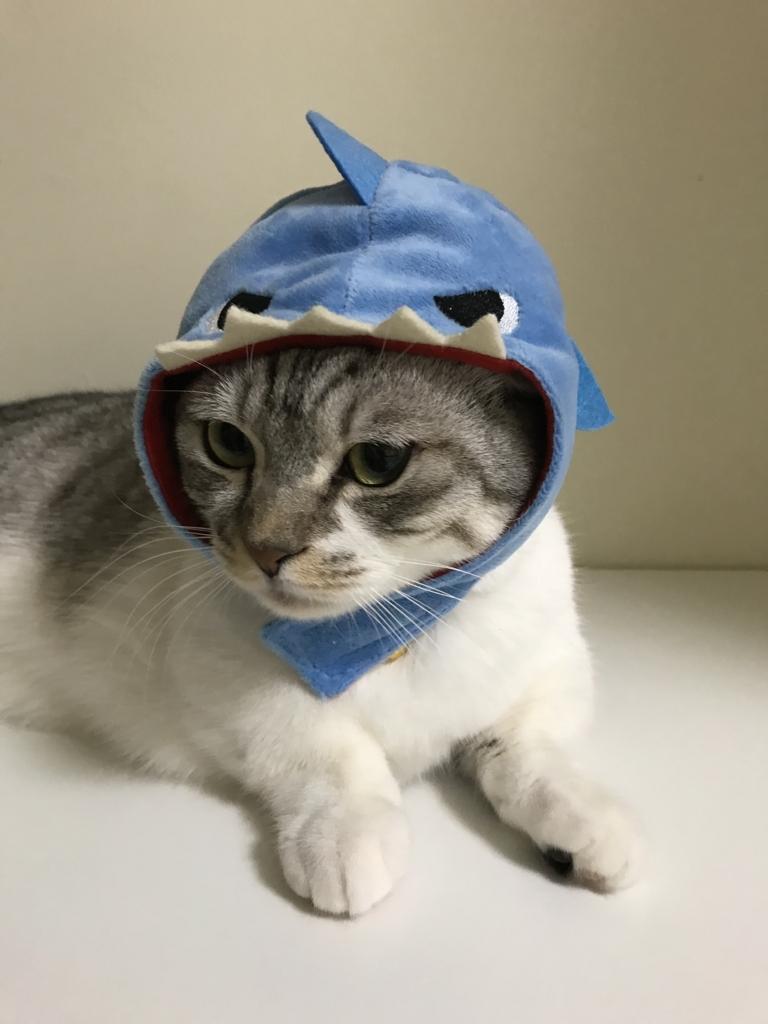 f:id:Gomez-cat:20180215192232j:plain