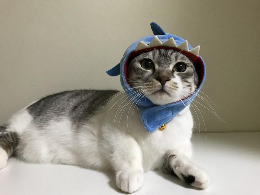 f:id:Gomez-cat:20180215192325j:plain
