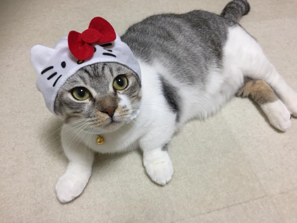 f:id:Gomez-cat:20180215215043j:plain