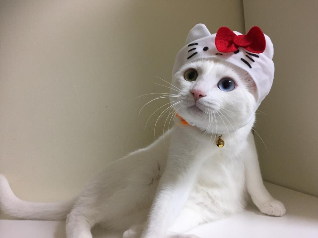 f:id:Gomez-cat:20180215215252j:plain