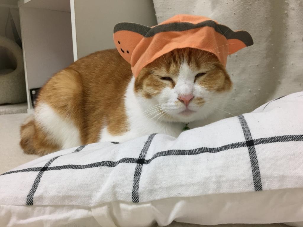 f:id:Gomez-cat:20180215215342j:plain