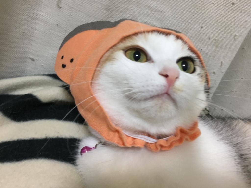 f:id:Gomez-cat:20180215215403j:plain
