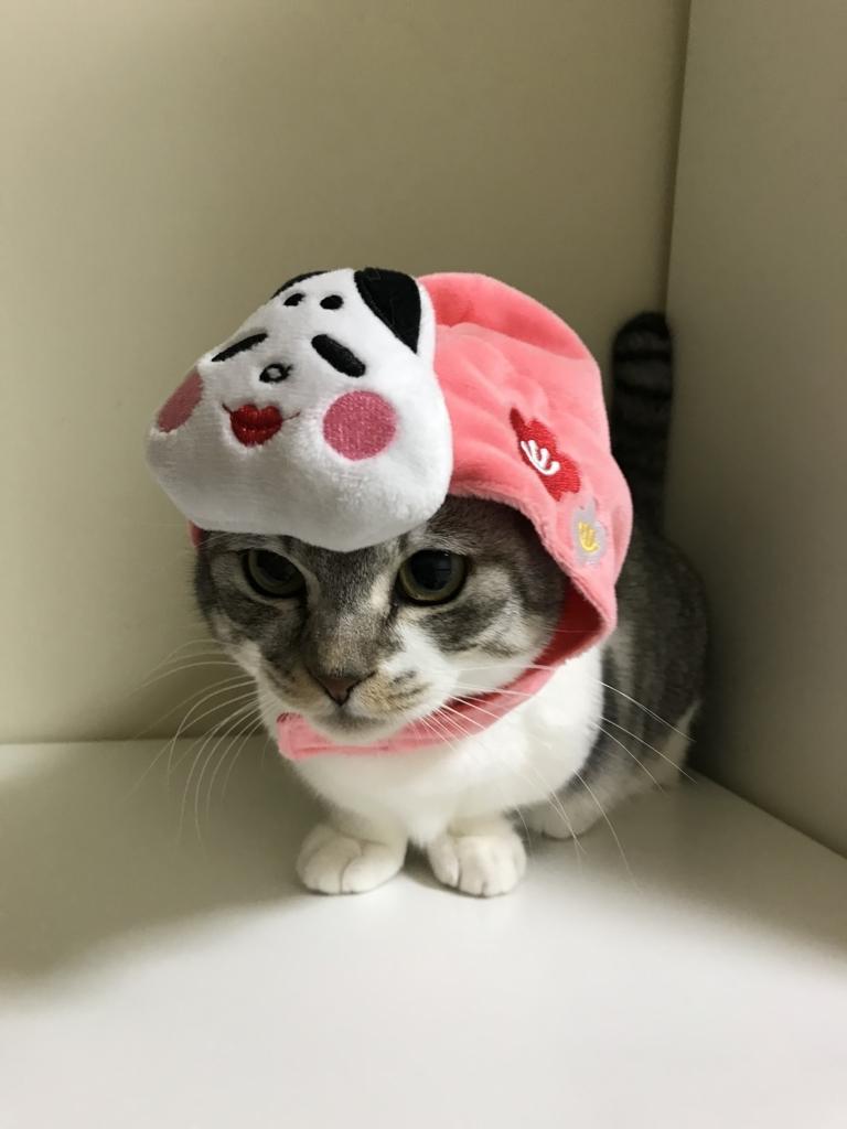 f:id:Gomez-cat:20180216102602j:plain