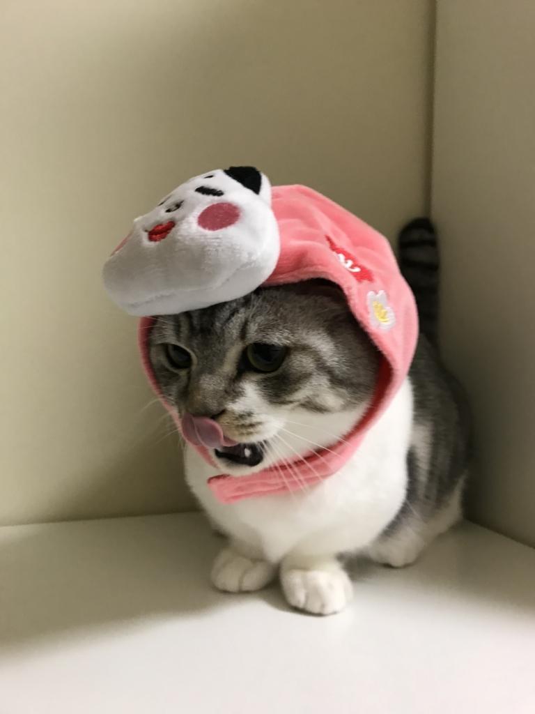 f:id:Gomez-cat:20180216102626j:plain