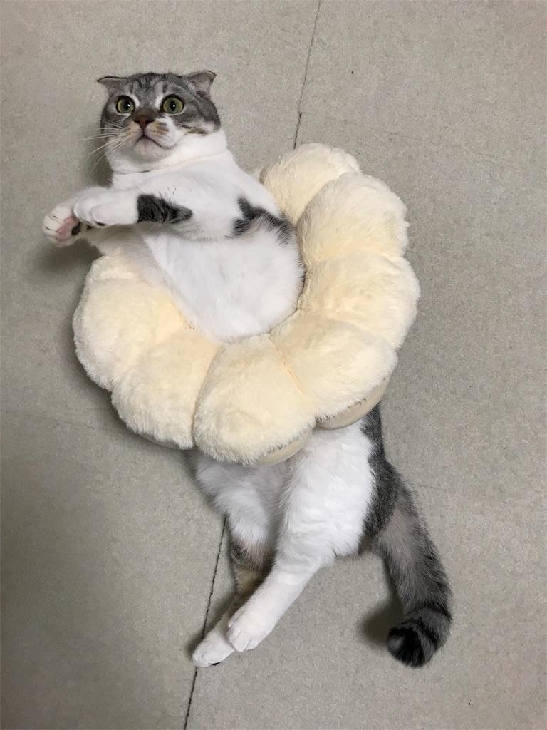 f:id:Gomez-cat:20180217003555j:image