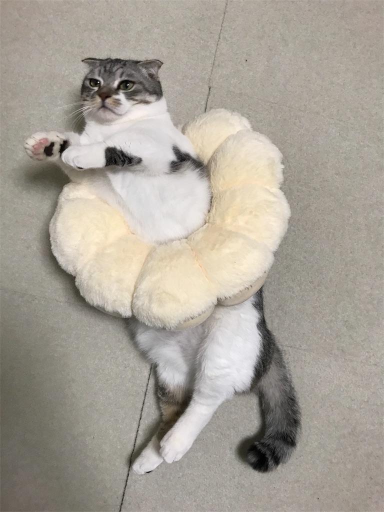 f:id:Gomez-cat:20180217003557j:image