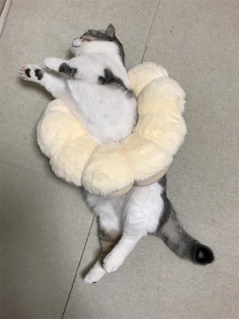 f:id:Gomez-cat:20180217003600j:image
