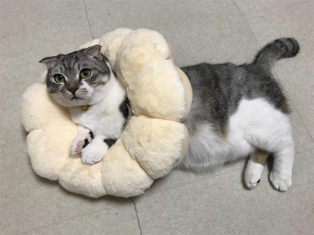 f:id:Gomez-cat:20180217003618j:image