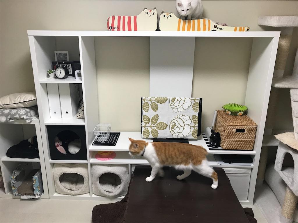 f:id:Gomez-cat:20180217125729j:image