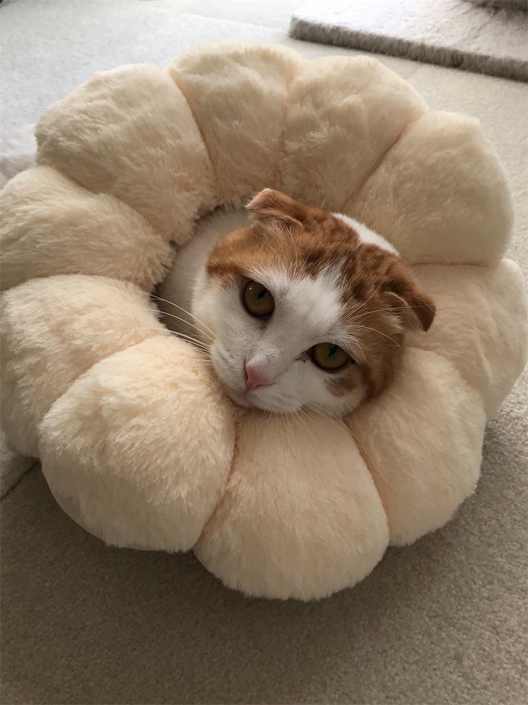 f:id:Gomez-cat:20180218004742j:image