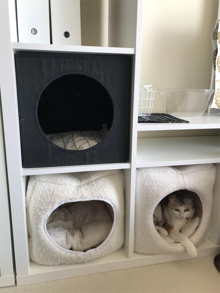 f:id:Gomez-cat:20180218140051j:image