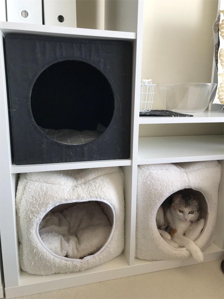 f:id:Gomez-cat:20180218140057j:image