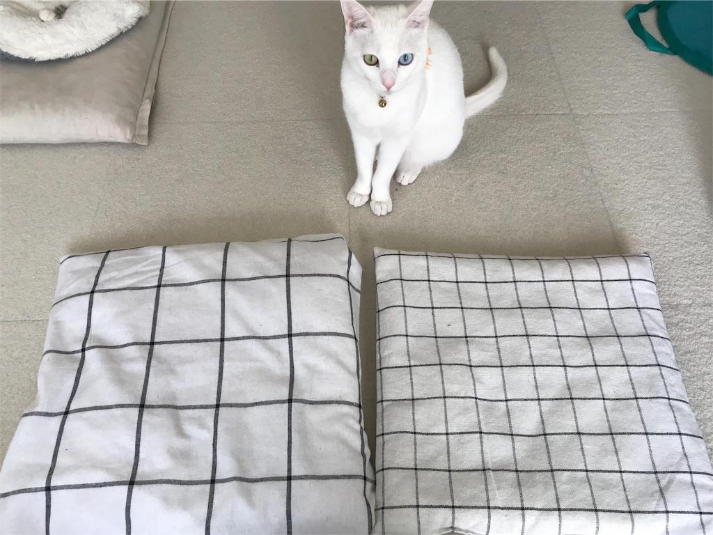 f:id:Gomez-cat:20180218150656j:image