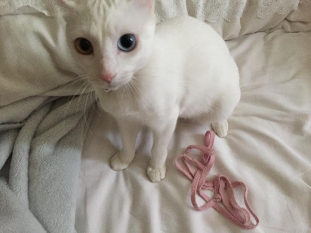 f:id:Gomez-cat:20180219181127j:plain