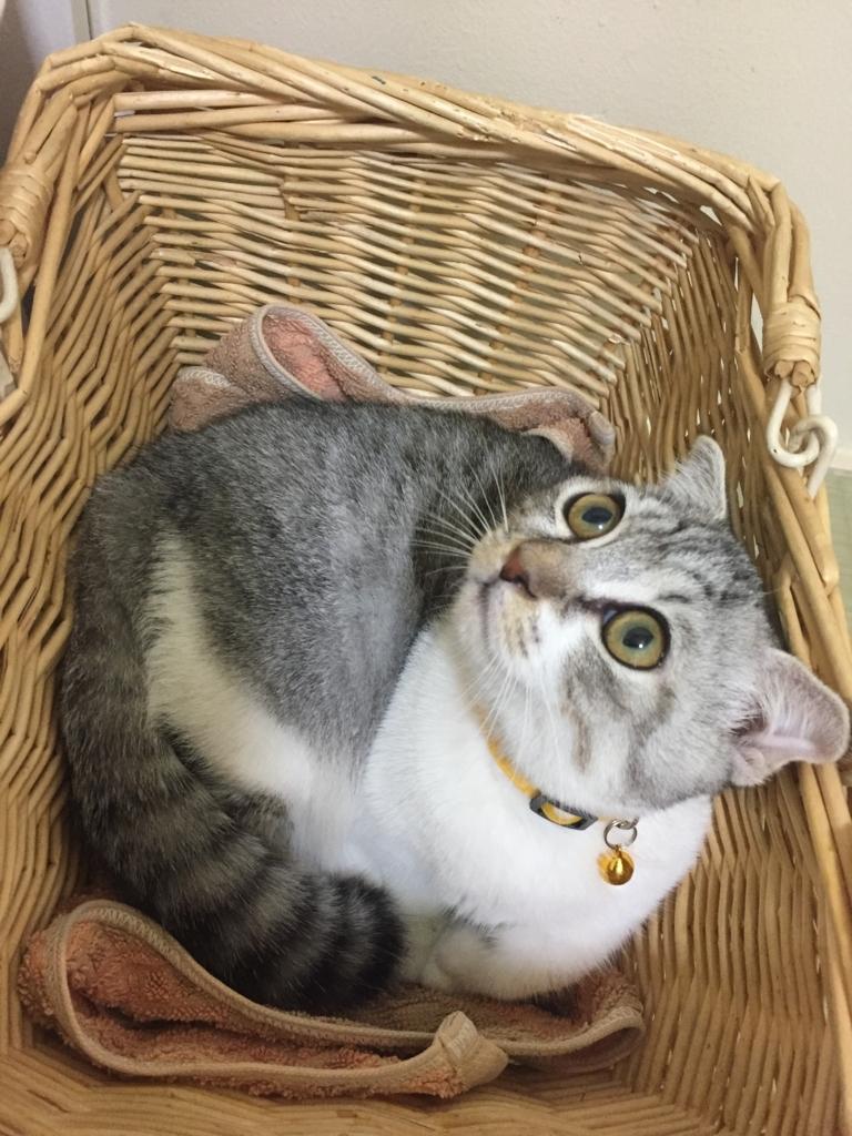f:id:Gomez-cat:20180219184400j:plain
