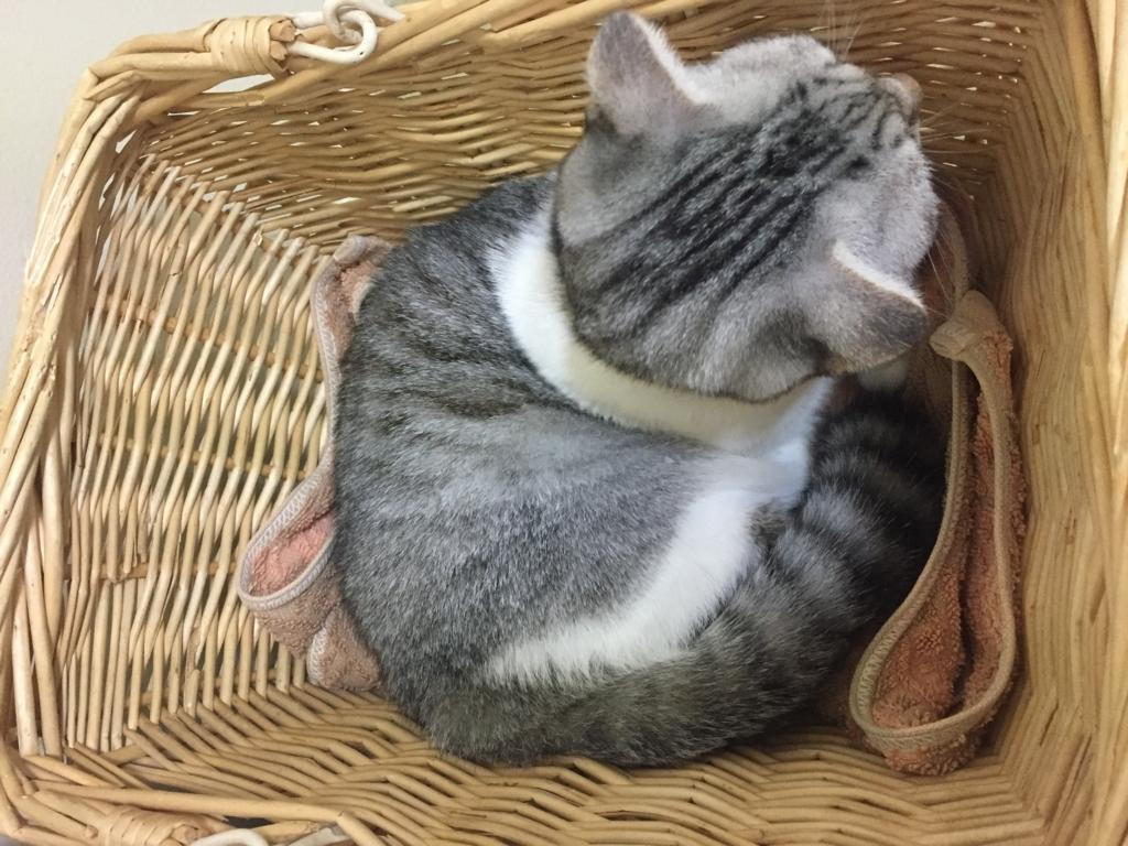 f:id:Gomez-cat:20180219184404j:plain