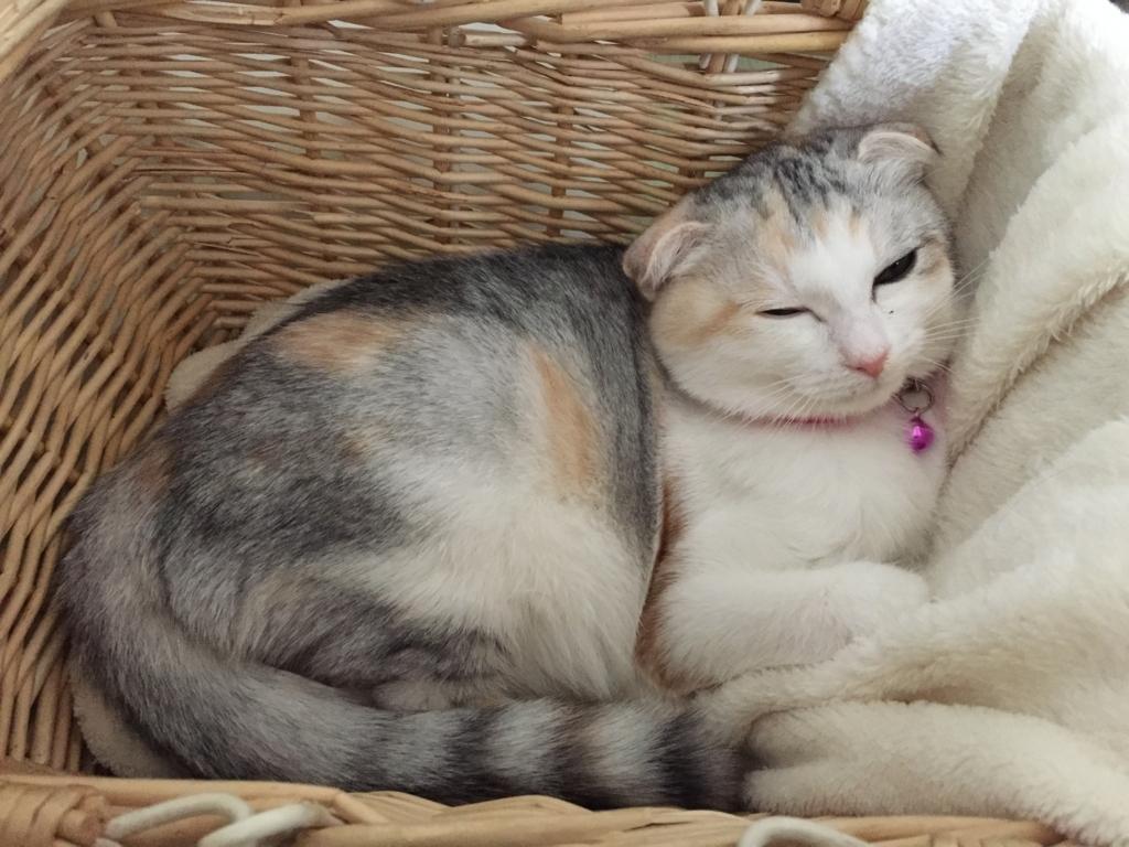 f:id:Gomez-cat:20180219184442j:plain