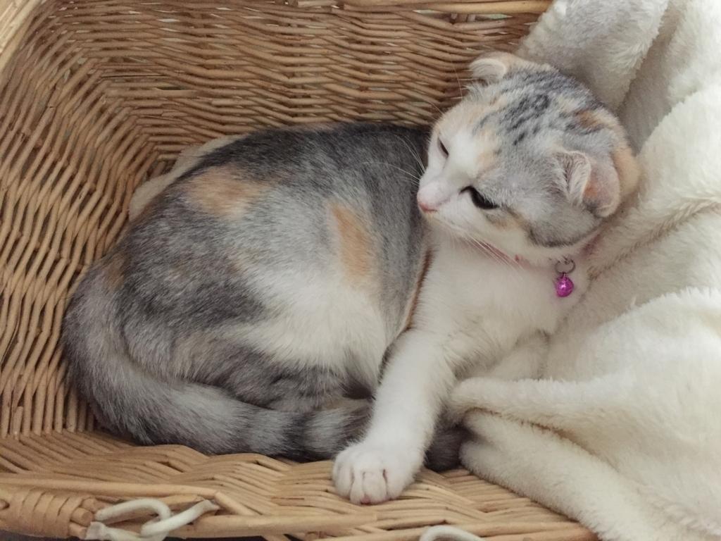 f:id:Gomez-cat:20180219184454j:plain
