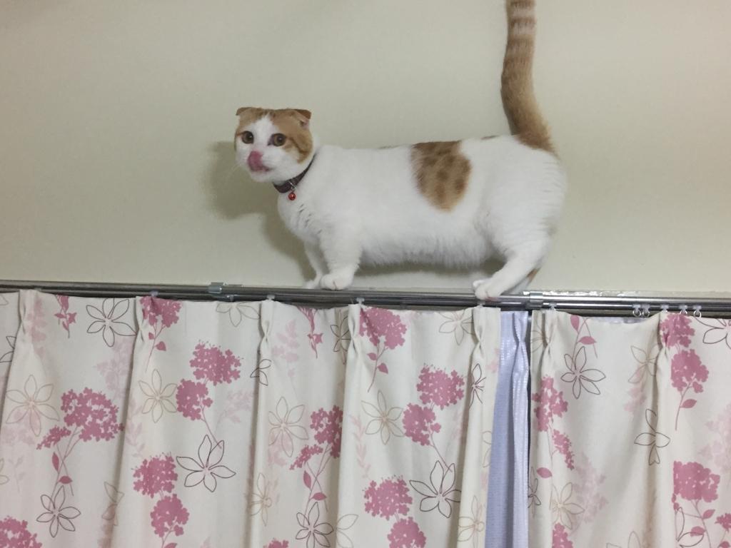 f:id:Gomez-cat:20180219190325j:plain