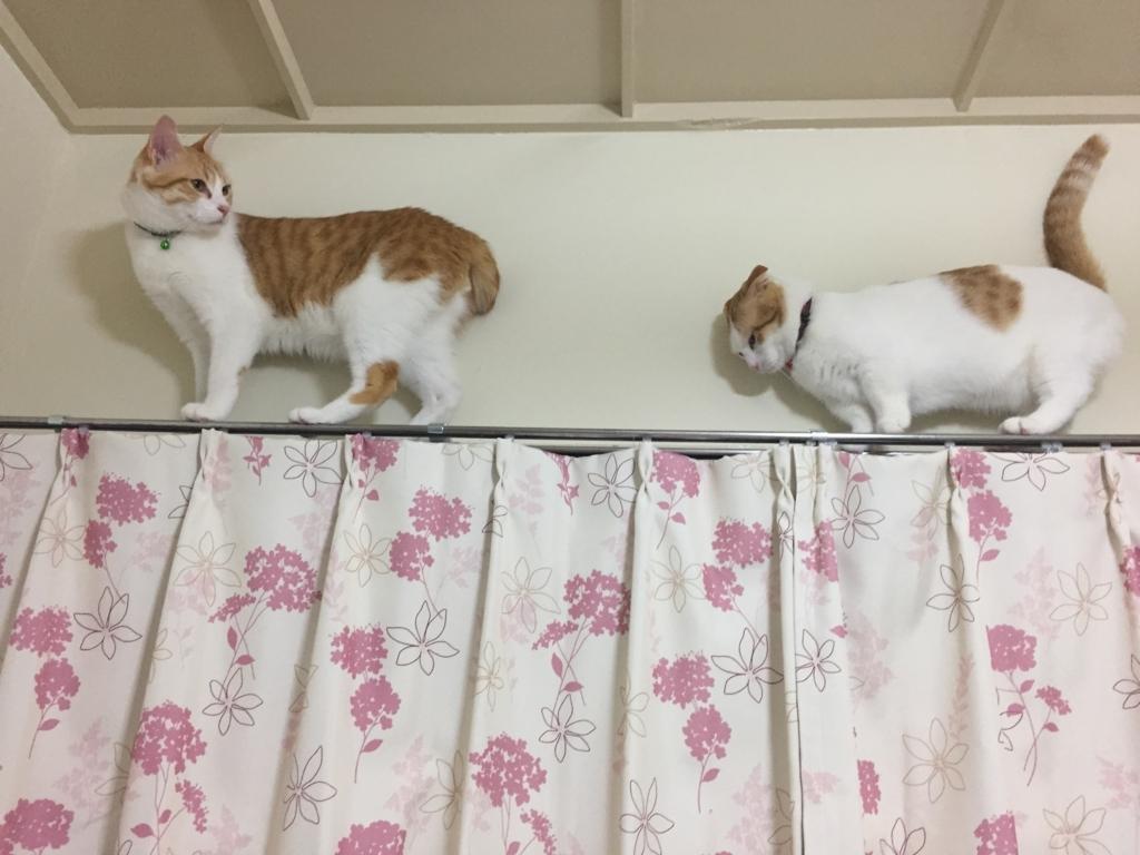 f:id:Gomez-cat:20180219191359j:plain
