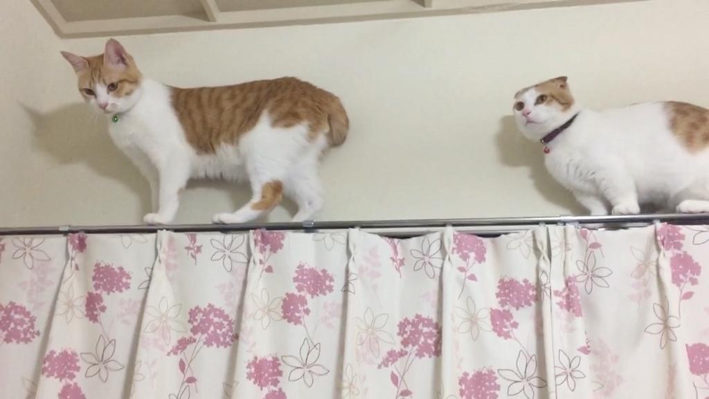 f:id:Gomez-cat:20180219191430j:plain