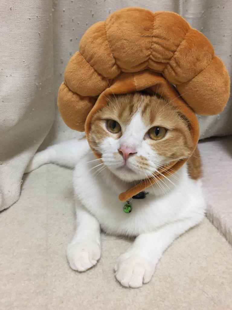 f:id:Gomez-cat:20180219225023j:plain