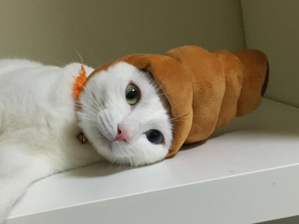 f:id:Gomez-cat:20180219225441j:plain