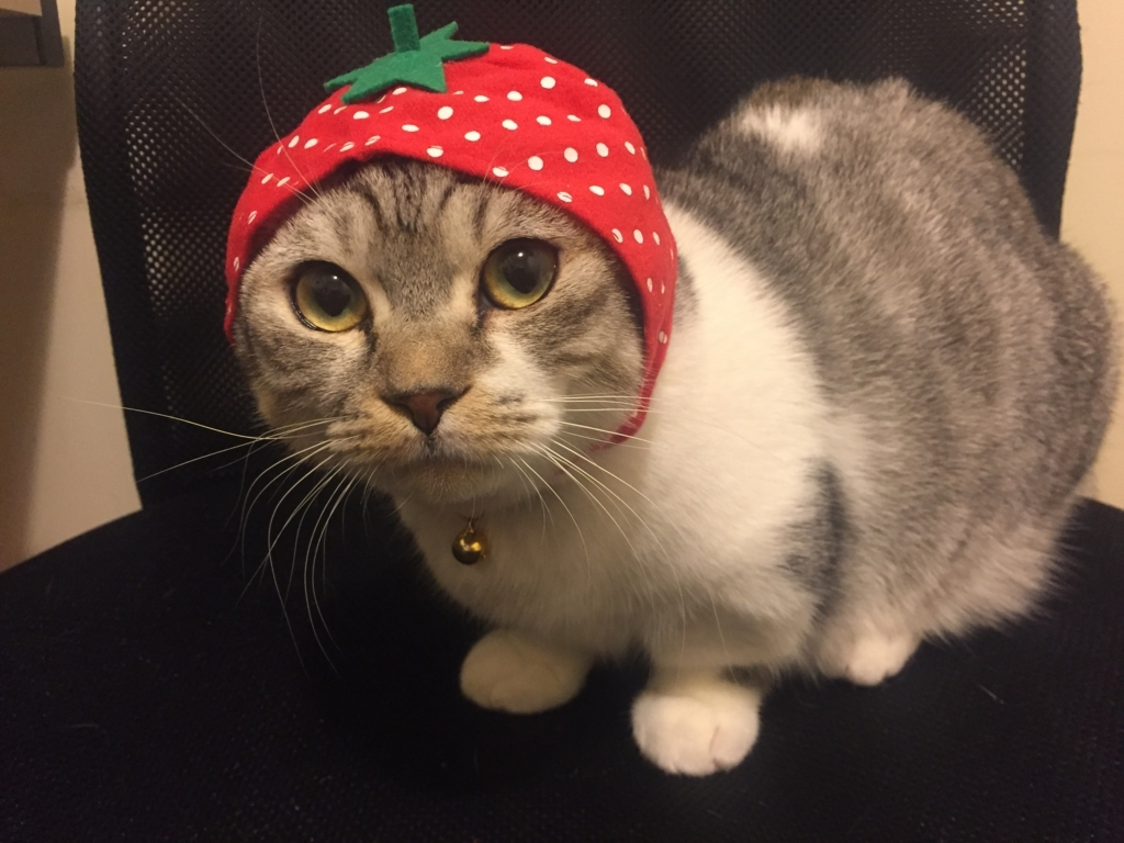 f:id:Gomez-cat:20180220000757j:plain