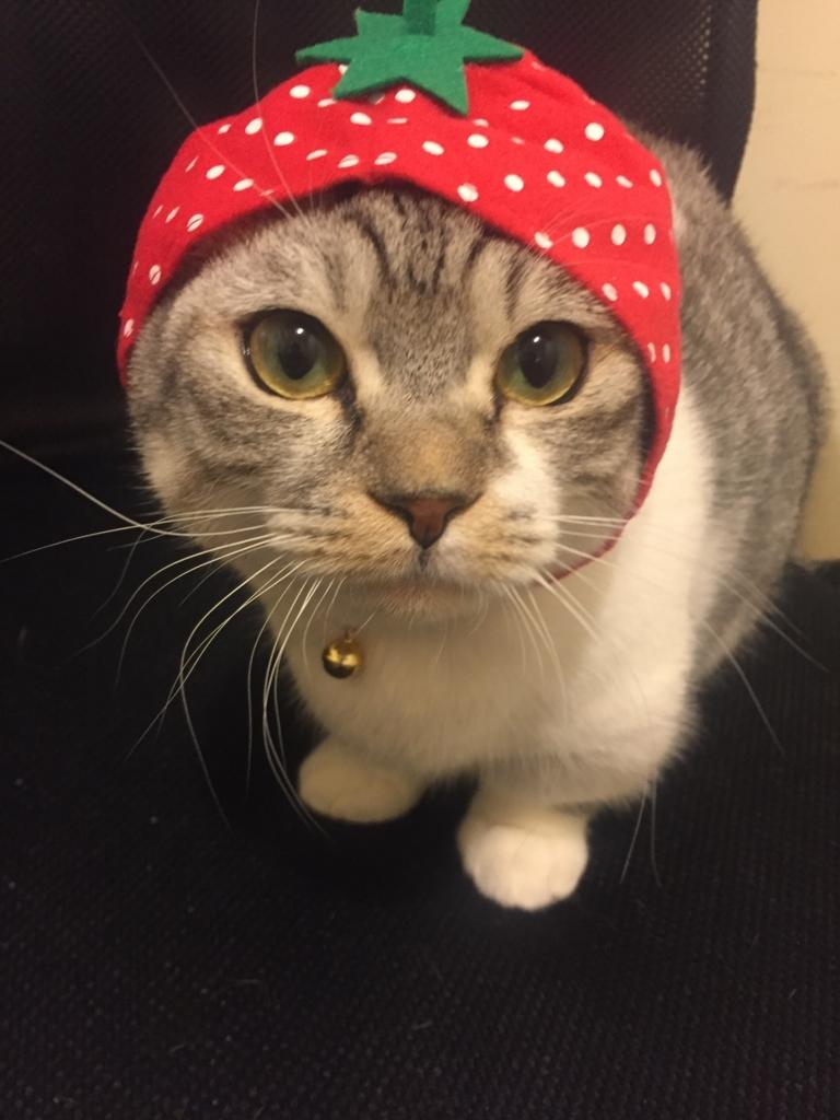 f:id:Gomez-cat:20180220000902j:plain