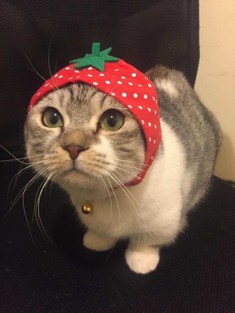 f:id:Gomez-cat:20180220000906j:plain