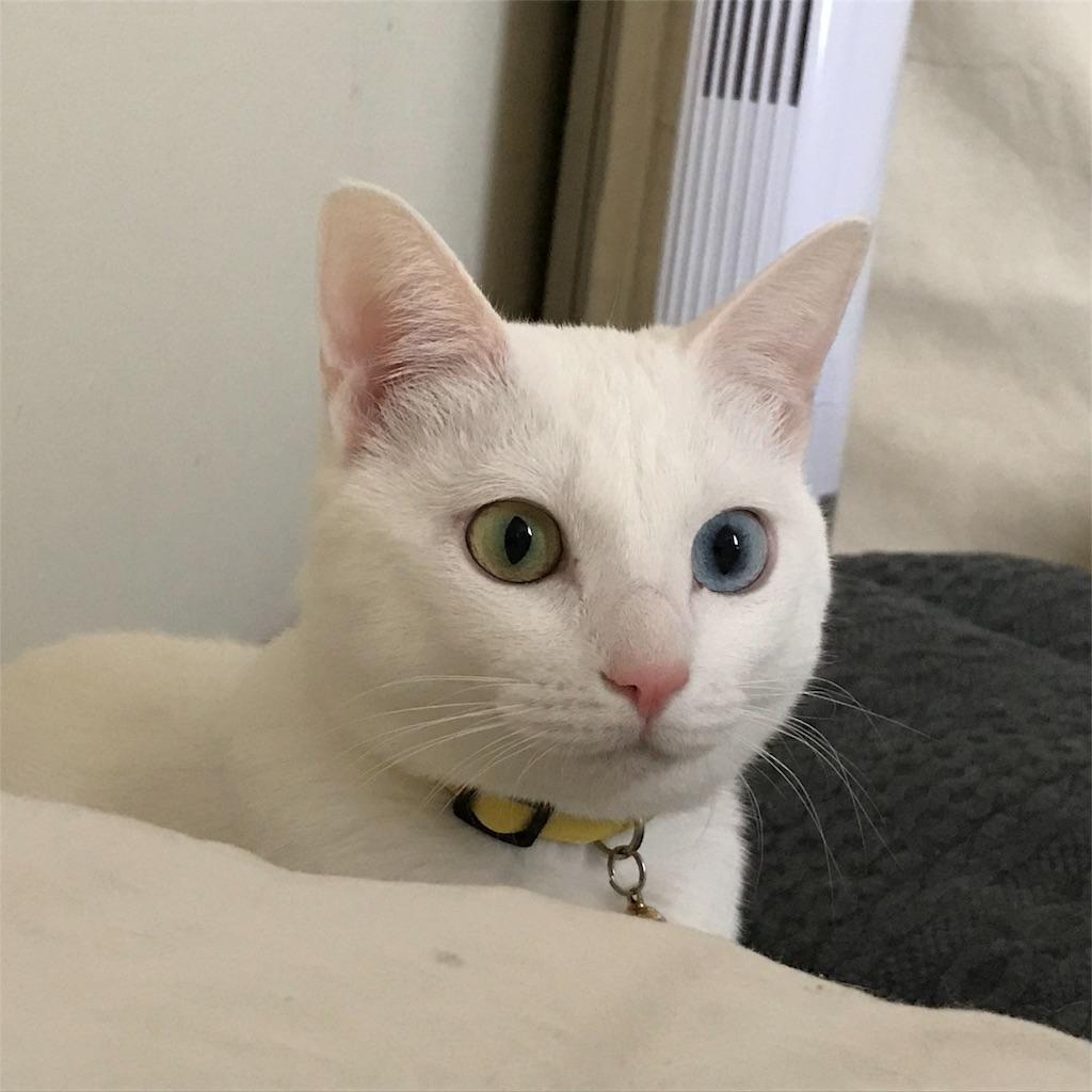 f:id:Gomez-cat:20180221095901j:image