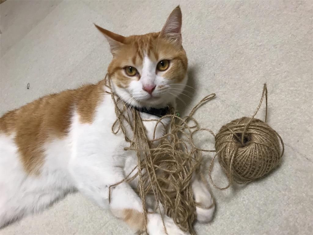 f:id:Gomez-cat:20180222014042j:image