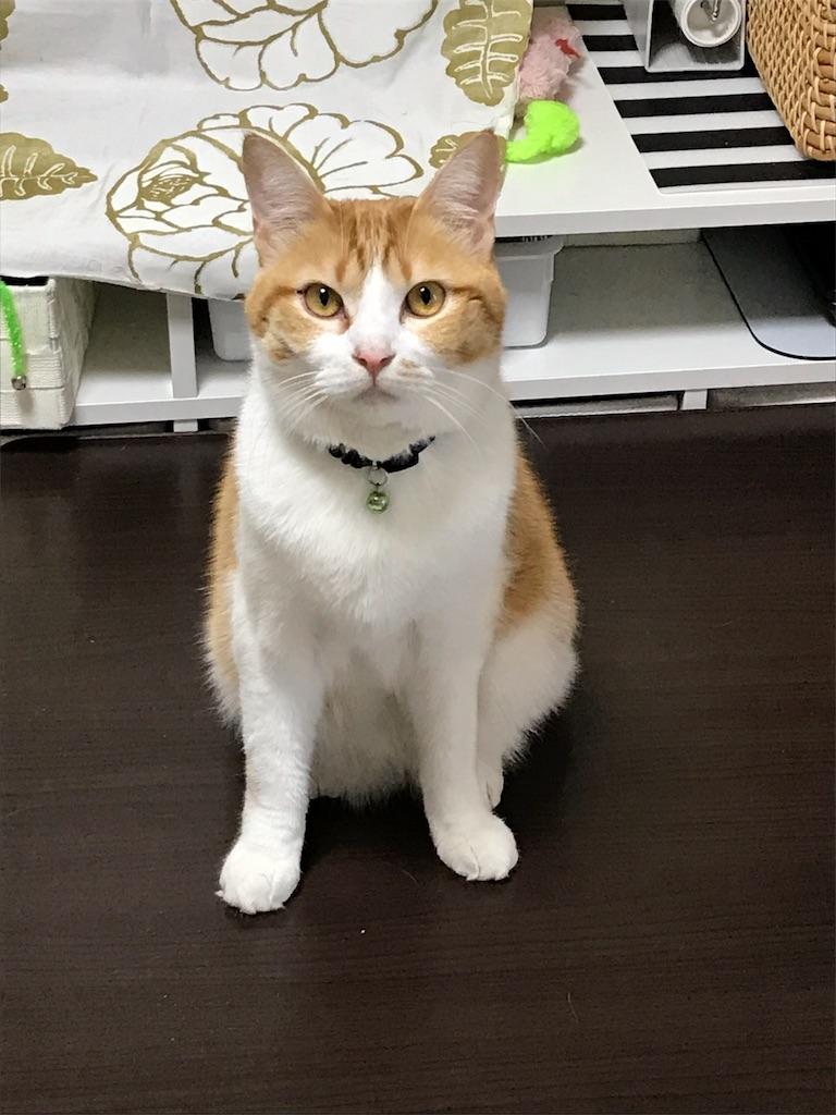 f:id:Gomez-cat:20180224095044j:image