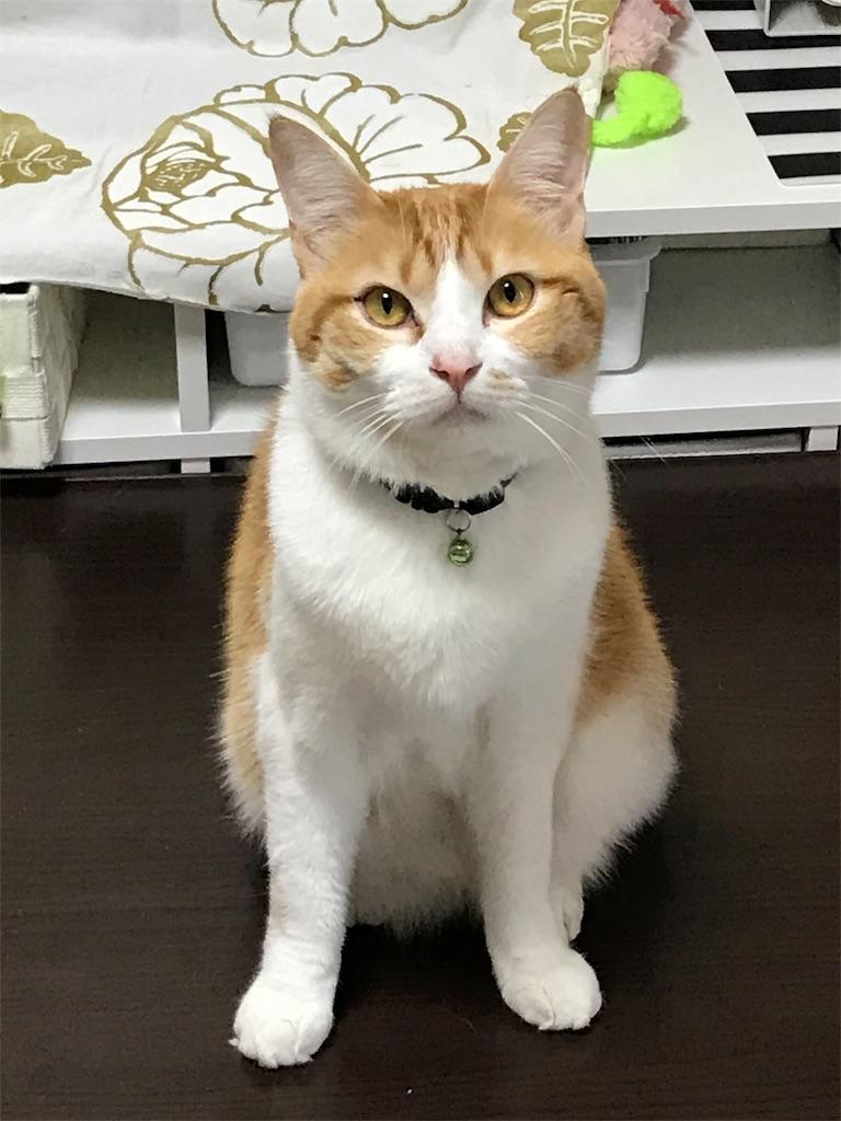 f:id:Gomez-cat:20180224095055j:image