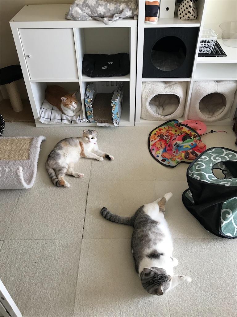 f:id:Gomez-cat:20180224231552j:image
