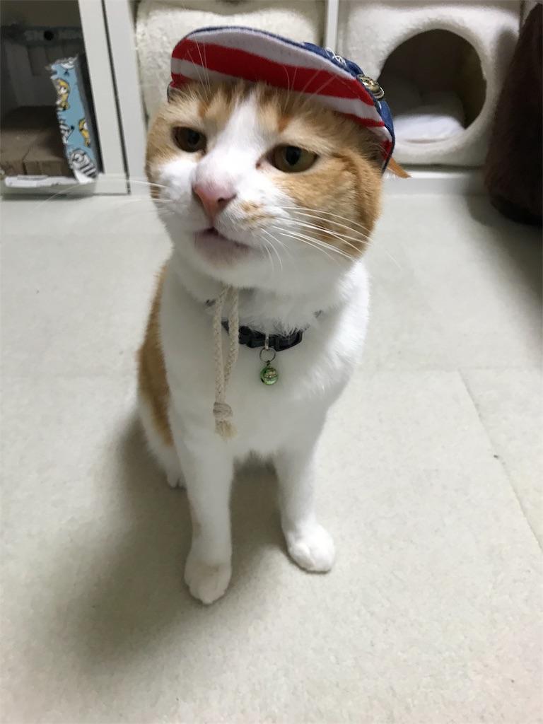 f:id:Gomez-cat:20180226175828j:image