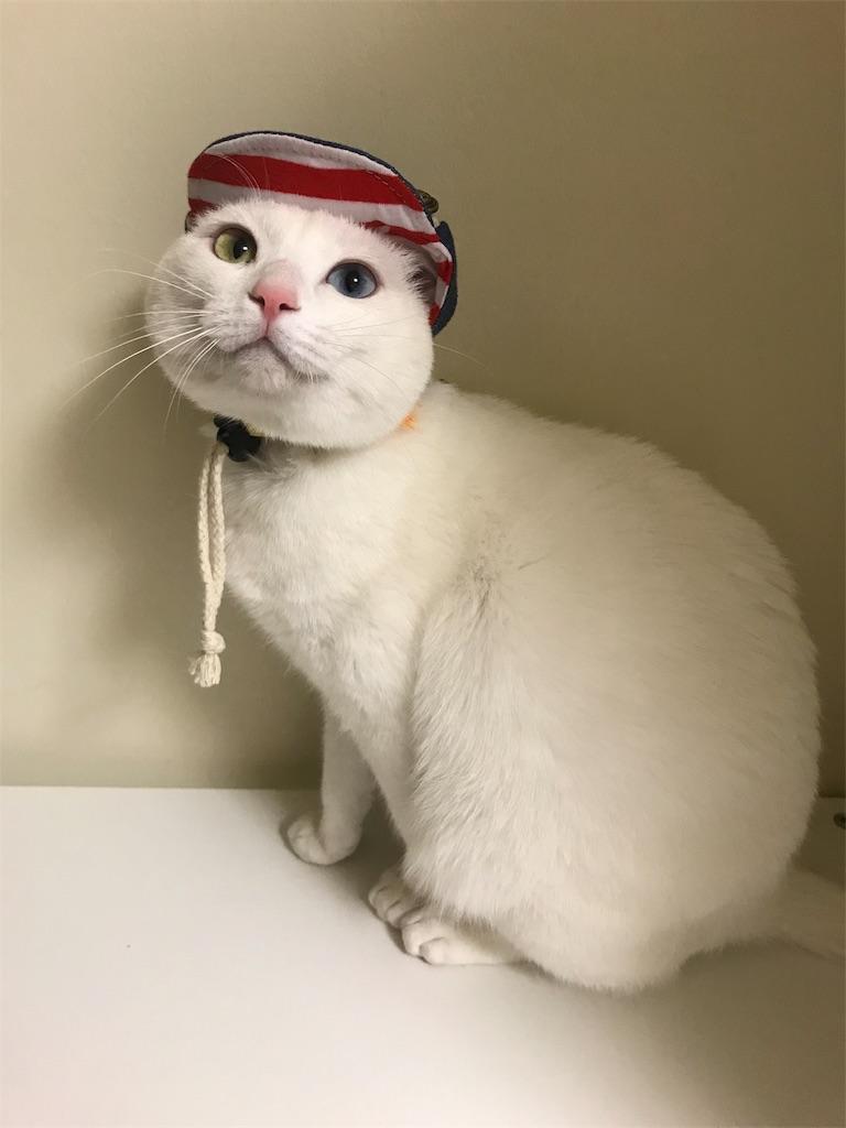 f:id:Gomez-cat:20180226175853j:image